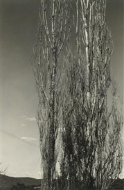 Alfred Stieglitz, The Two Poplars, Lake George with another Stieglitz photograph