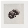 Rachel Whiteread, 12 Objects, 12 Etchings