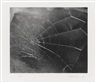 Vija Celmins, Spider Web