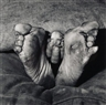 Roger Ballen, PUPPY BETWEEN FEET, 1999