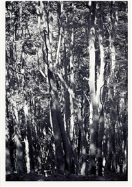 Artwork by Wolfgang Tillmans, WALD (TIERRA DEL FUEGO) II, Made of Laser print on smooth paper