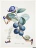 Dali Auction: Hidden Botanical Watercolors Head To Bonham's