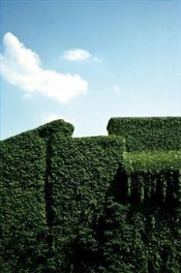 Artwork by Luigi Ghirri, Ferrara, Made of C-Print