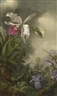 Martin Johnson Heade, WHITE ORCHID AND HUMMINGBIRD