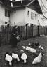 Erich Lessing, Krasic