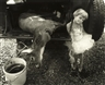 Sally Mann, Jessie and the Deer