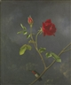 Martin Johnson Heade, RED ROSE WITH RUBY THROAT
