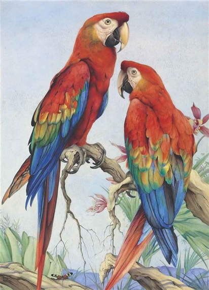 Edward Julius Detmold | Two scarlet macaws with orchids and