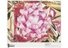 Jeff Koons, pink bow(poster)