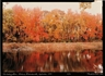 Frank Gohlke, The Sudbury River Ashland Massachusetts September 1989