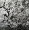 Lee Friedlander Photographs & Pierre Bonnard Drawings - Galerie Thomas Zander