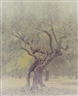Ori Gersht, Ghost: Olive 6