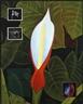 Amerika - David Castillo Gallery