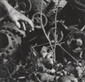 David Wojnarowicz, Untitled (Tree, Hand, Cogs, Gun)