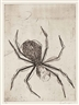 Louise Bourgeois, Spider