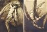 Emile Bernard, Deux anges