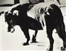 Daido Moriyama, STRAY DOG