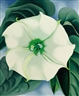 $44M O'Keeffe Painting More Than Triples Auction Record for Woman Artist