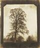William Henry Fox Talbot, ELM TREE AT LACOCK (WINTER)