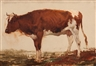 Anton Mauve, Red and white cow