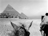 Fouad Elkoury: Suite Egyptienne - Galerie Tanit - Beirut