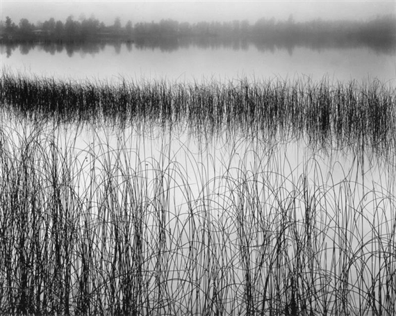 Brett weston reeds in pond silver print for Pond reeds for sale