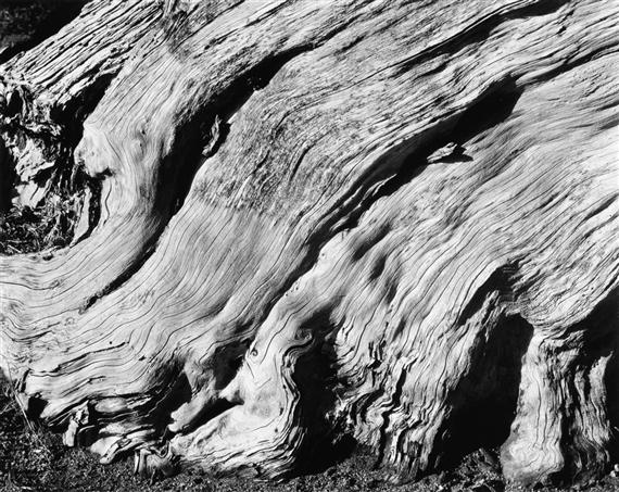 Edward Weston - Nude [Charis], 1934, Silver print,