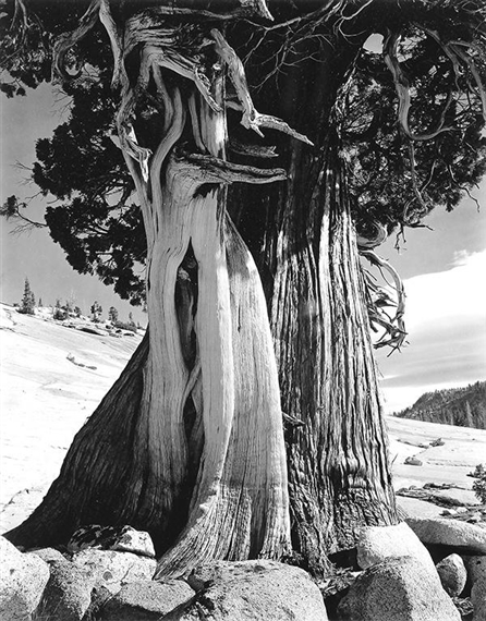 Edward Weston (1886-1958) , Aspen Valley, New Mexico, 1937 | Christies