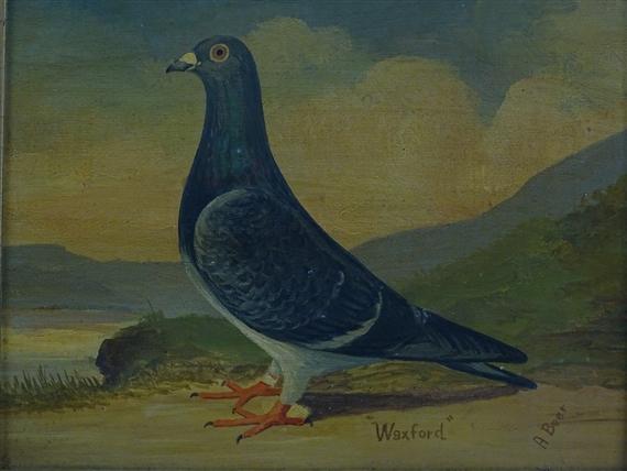 Beer Andrew | portrait of a racing pigeon | MutualArt