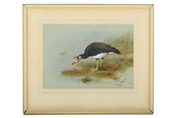 Rickman Philip   2 works: Muscovy Duck and Australian Wood